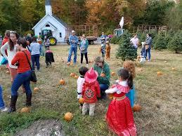 Pumpkin Picking In Ct by Pumpkin Picking Fairview Tree Farm