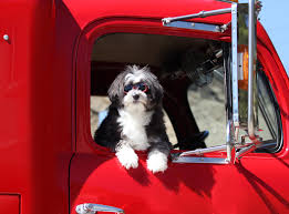 Office Dogs On Wheels: More Drivers Taking Pets On The Road ... The Worlds Best Photos Of Dog And Trucking Flickr Hive Mind Radio Hosts Rain Dogs Trucking Industry In The United States Wikipedia Free Sailin With Meredith Ochs Boating Times Long Island Gotham Actor Cdl Posses Mad Respect For Truckers Hard Al Jazeera America Road Dog Kevin Rutherford Image Truck Kusaboshicom Nation Rockin Bret Michaels Curl Up Next To A Trucker These Night Rest Stops Wired