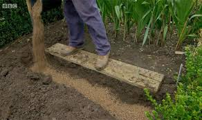 gardeners world how to plant daffodils and tulips garden