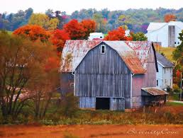 Farms: Old Barn Autumn Colors Fall Landscape Trees Leaves Picture ... Xlentcrap Barns Flowers Stuff 2009 In Vermont The Fall Stock Photo Royalty Free Image A New England Barn Fall Foliage Sigh Farms And Fecyrmbarnactorewmailpouchfallfoliagetrees Is A Perfect Time For Drive To See National Barn Five Converted Rent This Itll Make You See Red Or Not Warming Could Dull Tree Dairy Cows Grazing Pasture With Dairy Barns Michigan Churches Mills Covered Mike Of Nipmoose Engagement Beauty Pa Leela Fish Rustic Winter Scene Themes Summer Houses Decorations