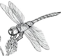 Dragon Fly Coloring Page Dragonfly Pages Cute