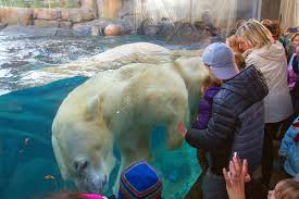 Brookfield Zoo Halloween Activities by Brookfield Zoo Offers Unforgettable Giraffe Encounter Chicago Parent