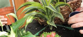 gesund wohnen mit pflanzen im kinderzimmer
