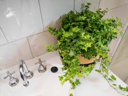 Best Plant For Bathroom by Articles With Plants For Bathrooms Nz Tag Plants For Bathroom Photo
