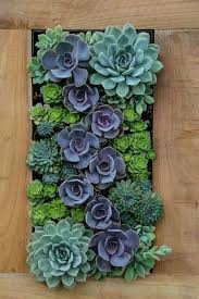 Fancy Design Succulent Living Wall With Best 25 Ideas On Pinterest