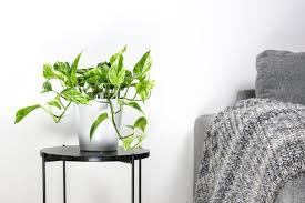 8 häufige fragen die zu zimmerpflanzen gestellt werden