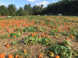 Frederick Maryland Pumpkin Patch by 10 Best Pumpkin Patches In Maryland That Are Perfect For Fall