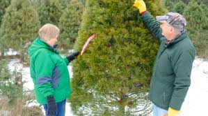 Griswold Christmas Tree Farm by Talkin U0027 Trees Local Christmas Tree Farms Offer Up Much More Than