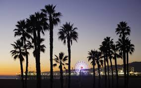 California Beaches Palm Trees Wallpaper 4