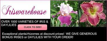 buy iris daylilies home page iriswarehouse
