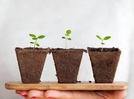 gute und schlechte feng shui pflanzen danijela saponjic