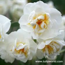 72 best cut flowers images on daffodils cut