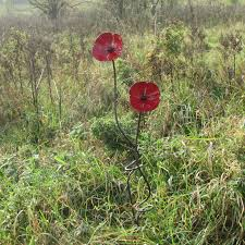 Pair Of Small Poppies On Twisted Garden Stake Poppy Old Smithy North Lincs