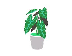 vielgrün macht glücklich zimmerpflanzen kaufen