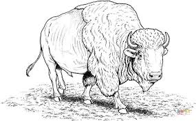 Click The American Buffalo Bison Coloring Pages To View Printable