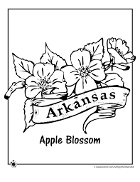 State Flower Coloring Pages Arkansas Page Classroom Jr