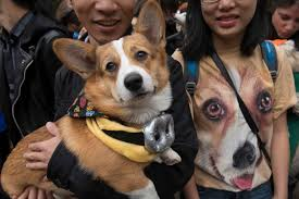 Tompkins Square Park Halloween Dog Parade 2015 by A Man Holds His Corgi Standing Next To A Woman Wearing A Corgi T