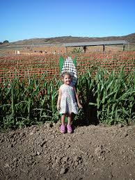 Cal Poly Pomona Pumpkin Patch Promo Code by Corn Maze Archives Project Refined Life