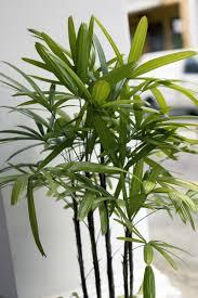 ungiftige zimmerpflanzen freudengarten