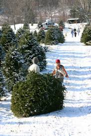 Northeast Ohio Christmas Tree Farms Fding The Perfect Christmas Tree News The Repository Christmas Farms In Ohio Rainforest Islands Ferry Weekend Getaway Guide Wooster And Wayne County Ohio Girl Twinsberry Tree Farm Victorian Bouquets Events Farm Legs Butt Core Stay Fit 24 20 Jun 2017 Looking For A Life Culture Amish Country Lodging Bed Breakfast House Cabins Barn Lights Decoration