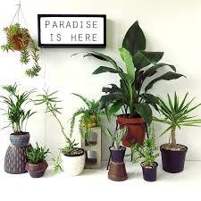Desk Indoor Desk Plants Indoor fice Plants Australia fice
