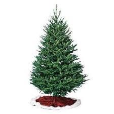 Fraser Fir Types Of Trees Christmas Douglas Tree