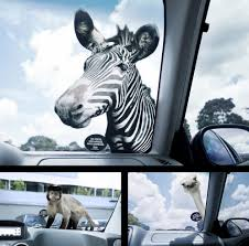 15 Coolest And Awesome Car Decals. 12 Of The Coolest Car Decals Dream Cars And Cars 4x4 Boar Totem Fangs Hog Hunting Stickers Cool Motorcycle 1979 Ford Truckcool Window Decals Youtube Baby Inside Window Decal Life Saver Warning In Case On Accident 2 22 Hoonigan Ken Block Hater Jdm Euro Tribal Mama Bear Max Tani Twitter Its Almost 2018 Cool Truck Decals Are 1 Vingtank Star Skull Sticker Wall Creative Partial Vehicle Wraps Category Touch Graphics Get Wrapped Hot Truck Super Mountain Range Vinyl New No This Is Not My Husbands This Buy Reflective Roaring Little Tiger Styling
