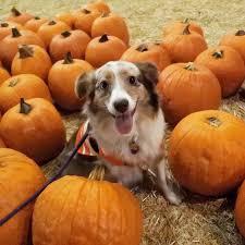 Old Mcdonalds Pumpkin Patch Scottsdale by 61 Best Shane Dawson Images On Pinterest Shane Dawson Fandoms