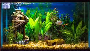 aquarium d eau douce poissons aquarium d eau douce 28 images vente de poissons d