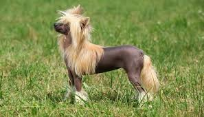 Quiet Small Non Shedding Dog Breeds by 25 Most Quiet Dogs By Breed Size Small Medium And Large