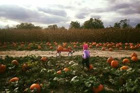 North Lawrence Pumpkin Patch by 2017 Indianapolis Pumpkin Patch Guide Indy U0027s Child Parenting