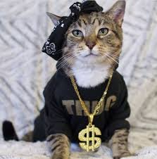 thug cat thug cats hq pictures of cats and kittens free