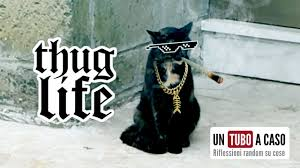 thug cat this cat is a gangster funniest thug