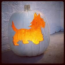 Dirty Pumpkin Carving Pictures by Westie Pumpkin Carving Halloween For Dogs Pinterest Pumpkin