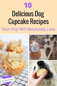 Pumpkin For Dog Constipation by Cupcakes Aren U0027t Just For Humans Anymore Here Are The 10 Best Dog
