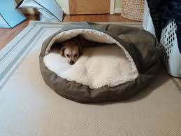 Burrowing Dog Bed by One Of My Dogs Decided He Wanted A Blanket So He Chewed A Hole And