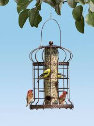 Backyard Birds, Bees And Bats | Backyard Habitat | Gardener's Supply Some Ways To Keep Our Backyard Birds Healthy Birds In The These Upcycled Diy Bird Feeders Are Perfect Addition Your Two American Goldfinches Perch On A Bird Feeder Eating Top 10 Backyard Feeding Mistakes Feeder Young Blue Jay First Time Youtube With Stock Photo Image 15090788 Birdfeeding 101 Lover 6 Tips For Heritage Farm Gardenlong Food Haing From A Tree Gallery13 At Chickadee Gardens Visitors North Andover Ma