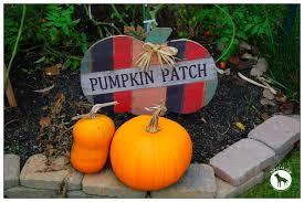 Rombach Pumpkin Patch St Louis Mo by Pumpkin Patch St Louis