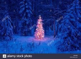 Pre Lit Flocked Alaskan Christmas Tree by Alaskan Christmas Tree Christmas Lights Decoration