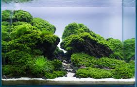 Planted Tank Reaching By Robertus Hartono - Aquarium Design ... Aquascaping Aquarium Ideas From Aquatics Live 2012 Part 2 Youtube How To Make Trees In Planted Aquarium The Nature Style Planted Tank Awards Ultimate Shop In Raipur Fuckyeahaquascaping My 90p Tank One Month See Day 1 Here Best 25 Ideas On Pinterest Home Design Designs Aquascape Happy Journey By Adil Chaouki 1ft Cube Aquascaping Fuck Yeah Anyone Do For Your Fish Srt Hellcat Forum Archives Javidecor