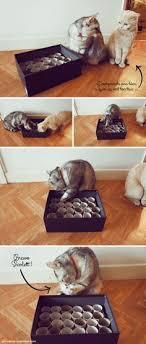 jouet à trois roues chat attrape la balle balles achat vente et