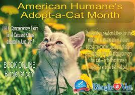 adopt a cat june is american humane s adopt a cat month bingle vet