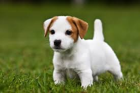 Cute Non Shedding Dog Breeds by 15 Cutest Puppies That Will Melt Your Heart Barking Royalty