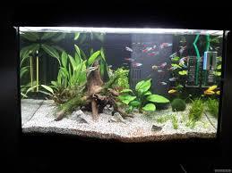 Spongebob Fish Tank Decor Set by 60l Tetra Aquarium 5280ff3ca8b21 Jpg 1600 1200 Aquarium