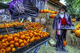 Swans Pumpkin Farm Hours by Halloween Pumpkin Patch And Petting Zoo Windmill Farms Produce