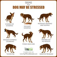 Excessive Hair Shedding In Dogs by Top 10 Signs Your Dog May Be Stressed Top 10 Home Remedies