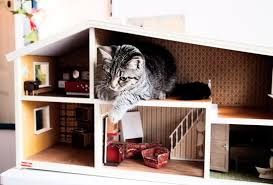 cat in house and a big cat in a tiny house dos family