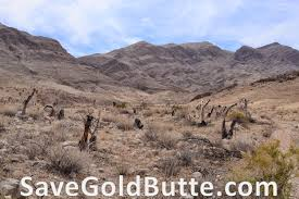 Tule Springs Fossil Beds by Save Gold Butte June 2014