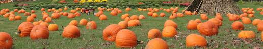 Portland Maine Pumpkin Patch by Fall In Kennebunkport Maine Fun Things To Do In Autumn