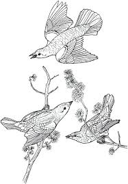 Coloring Page Birds Bird Flying